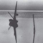 El mar de iguanas